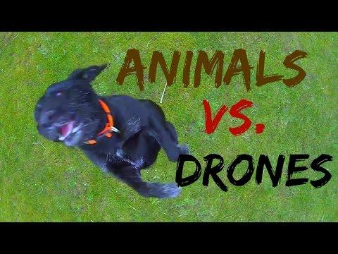 Animais Vs Drones - A batalha continua