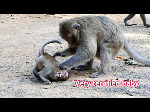 Food challenge , Very terrified baby,  adorable wildlife, monkeys trying hard to eat food | AW