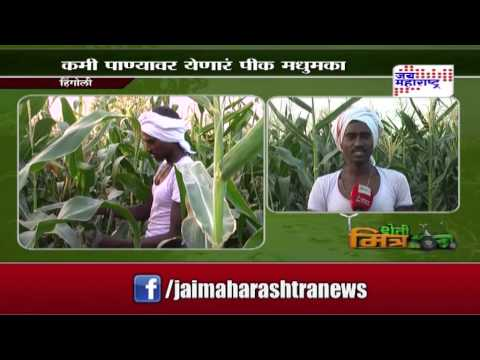 Sheti Mitra, sweet corn farming in hingoli - seg 1