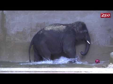 Baby Elephants Rock!
