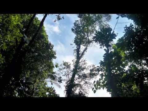 Choco, Quibdo, Selva, Magico, Libre, Tranquilo, Turismo Colombia