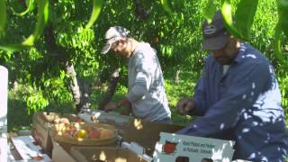 Clark Family Orchards - journey to the Vail Farmers Market