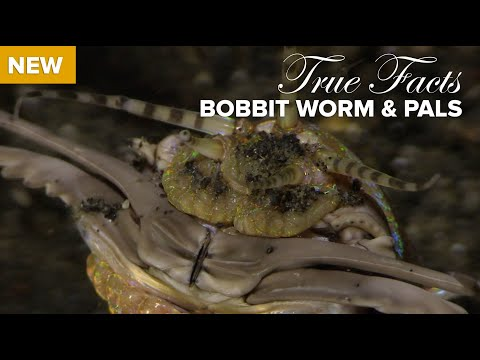 True Facts About Sea Worms