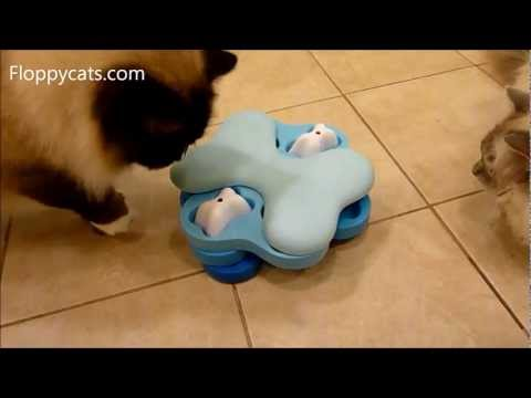 0 Nina Ottosson Dog Tornado Cat Puzzle Toy Review