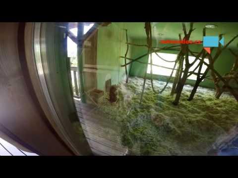 Opice v Zoo - objetí a jídlo