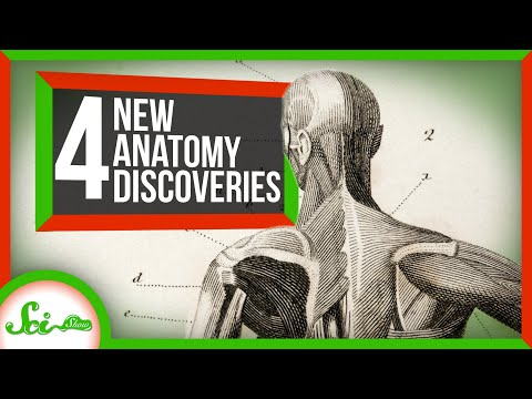 Scientists Found 4 New Human Body Parts