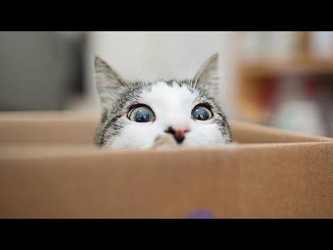 Почему кошки любят коробки  - DomaVideo.Ru