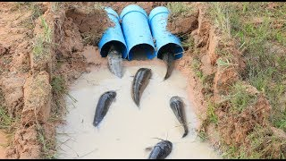 Hello Everyone! Greeting from Cambodia!Today i want to show you about: Amazing PVC Pipe Deep Hole Fish Trap To Catch A Lot Of Fish Make By A Smart Boy in my village.If you enjoy this video click Thumb Up and Subscribe our CHANNEL for more videos;Follow me!Google Plus: https://goo.gl/7tltUZFacebook: https://www.facebook.com/7DDaily/Twitter: https://twitter.com/7ddailyPinterest: https://www.pinterest.com/7ddaily/Thank you for watching my video!