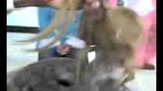 Video ALLAH  KA KUDRAT  KA  KARISMA.3gp MP3, 3GP, MP4, WEBM, AVI, FLV Agustus 2018