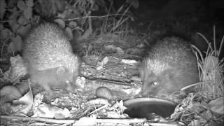 Wildlife Trail Camera - 10.10.2016