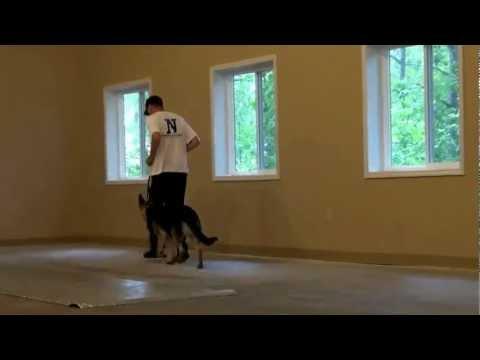 Duke (German Shepherd) Dog Training Boot Camp Video Minnesota