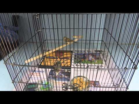 Suisun Wildlife Center's Baby Animal Shower