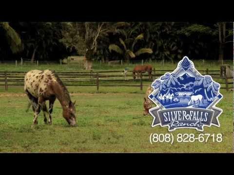 Kauai Horseback Riding Spotlight - Silver Falls Ranch - KVIC-TV, myKauai.com [Activity]