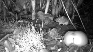 Wildlife Trail Camera - 11.12.2016