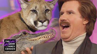 Ron Burgundy Meets a Cougar, Alligator & Skunk