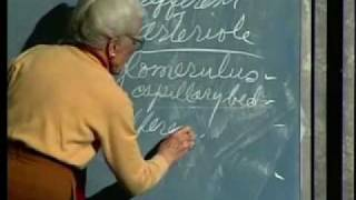 Integrative Biology 131 - Lecture 35:  Urinary System