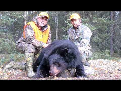manitoba bear hunts in canada