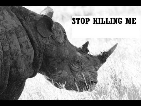 briczar22 - RHINO- Stop Killing Me A collection of Rhino photographs from Lewa Wildlife Conservancy Kenya, Africa taken by Brian's Art for Animals. We are losing the wor...