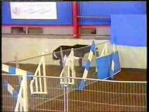Pembridge Stunner Rascal Stallion grading video of one of Pembridge Stud