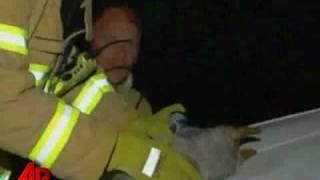 Dog Nearly Dies Saving Kittens From Fire