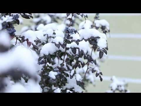 Canon 6D próbka wideo / sample #2