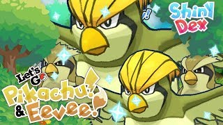IM SO TIRED OF PIDGEYS! CLICK TO FIND OUT WHY! by aDrive