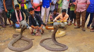 Video amazing street performers or busker |  cobra flute music played by snake charmer MP3, 3GP, MP4, WEBM, AVI, FLV Mei 2018