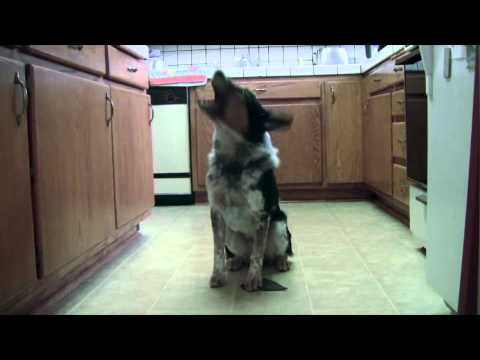 Jumpy – najtalentiraniji pas