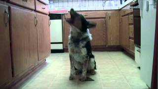 This Is Probably The Best Trained Dog Ever! You Won't Believe How Talented He Is!