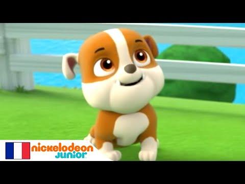 Episodio completo cartone animato paw Patrol e la palla, salvataggio della palla. Cartone animato in francese palla paw Patrol