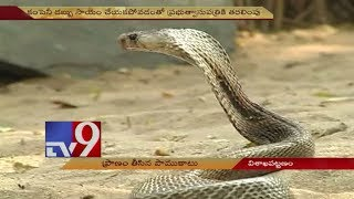 Video Snake Catcher killed by snake bite | Visakhapatnam - TV9 Now MP3, 3GP, MP4, WEBM, AVI, FLV Agustus 2018