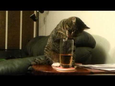 Katt som tycker om whiskey