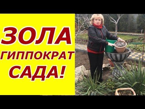 Зола - Гиппократ вашего сада  Вы этого не знали  - DomaVideo.Ru