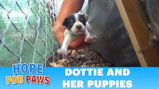Hope For Paws: Homeless mom gives birth to three puppies on a college campus. Please share.