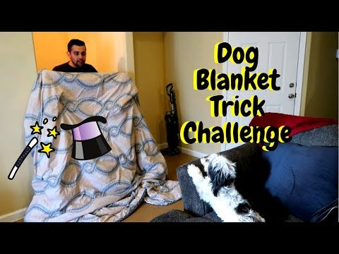 DOG BLANKET TRICK CHALLENGE (What The Fluff????)