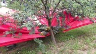 Video Berba sljive u Srbiji / Harvesting plums in Serbia MP3, 3GP, MP4, WEBM, AVI, FLV April 2019