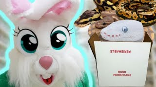 UNBOXING LOTS OF SNAKES AS THE EASTER BUNNY!!! Brian Barczyk by Brian Barczyk