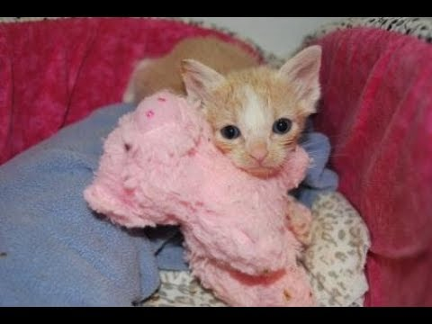 Kitten Cuddle Room - Under The Sea Kittens - Orphaned Foster Kittens