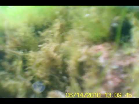 MD80 mini dv camera - a simple underwater housing