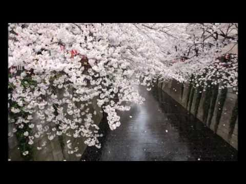 Amazing Tree Tunnels from around the world 2014 HD 1080p