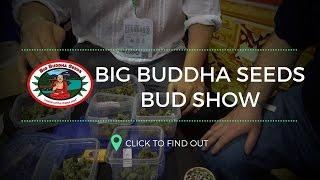 Spannabis 2017 - Big Buddha Seeds BUD SHOW! by Urban Grower
