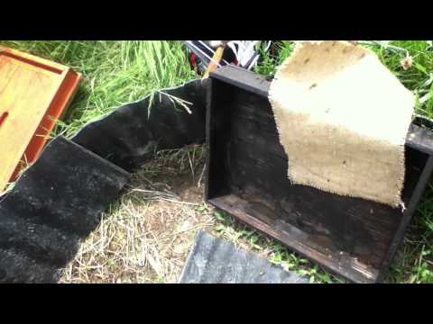 May 7, 2012: I just moved my bees in and they are already dying to pesticides?