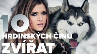 Video TOP 10 Hrdinských Činů Zvířat MP3, 3GP, MP4, WEBM, AVI, FLV Agustus 2017