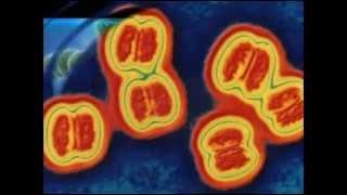 Научное описание менингита