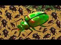 Beetle Uprising Queen Beetle Controls Giant Hive Army B