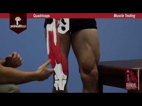Quadriceps Muscle Test Vizniak