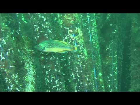 Kunstige rev fra PE Reefs