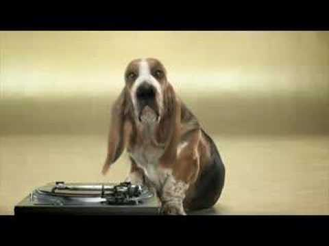 Basset Hound Beat Box