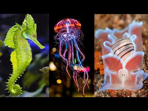 10 Most Beautiful Sea Creatures in the World
