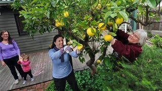 Darebin Fruit Squad